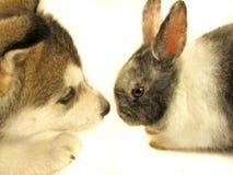 Konijn en puppy Royalty-vrije Stock Foto's