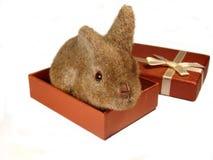 Konijn in gift2 Stock Afbeelding