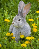 Konijn in gras Royalty-vrije Stock Foto
