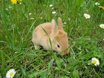 Konijn in het gras Stock Foto's