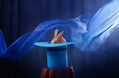 Konijn in hoed op blauwe achtergrond stock afbeeldingen