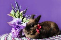 Konijn met bloemen stock foto