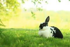 Konijn op het gras Royalty-vrije Stock Afbeelding