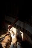 Konijn in zijn bijlage die zich op voedsel 2 verheugen Stock Afbeelding