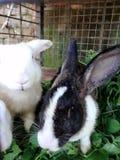 konijnen royalty-vrije stock foto