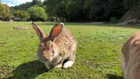 konijnen stock footage