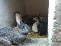 konijnen stock fotografie