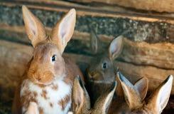 konijnen Stock Foto's
