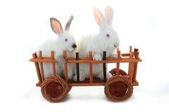 konijnen Royalty-vrije Stock Afbeeldingen