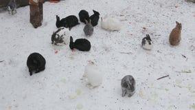 Konijnen in de winter stock video