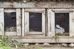 Konijnen in kooi Stock Foto's