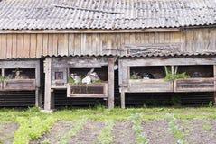 Konijnen in kooien Royalty-vrije Stock Foto