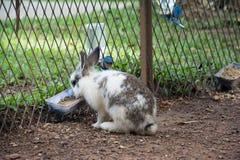 Konijnenkonijntje in de tuin Stock Foto's