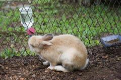 Konijnenkonijntje in de tuin Royalty-vrije Stock Fotografie