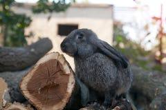 Konijnkonijntje in de tuin Stock Afbeelding