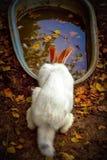 konijntje royalty-vrije stock afbeelding