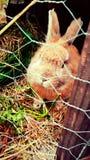 konijntje Royalty-vrije Stock Afbeeldingen