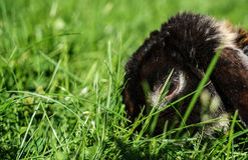 Konijntje dat gras eet royalty-vrije stock foto