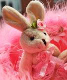 Konijntje in roze Royalty-vrije Stock Foto's