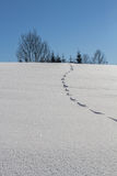 Konijnvoetafdrukken in diepe verse sneeuw Royalty-vrije Stock Foto