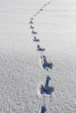Konijnvoetafdrukken in diepe verse sneeuw Stock Foto's
