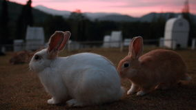 Konijnzitting op zonsondergangtijd Stock Afbeeldingen