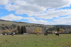 Konik i konie w rolnym polu obraz stock