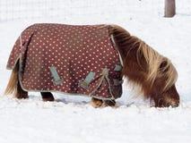 Konik w śniegu obraz stock