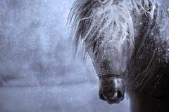 Konika koński portret w opadzie śniegu fotografia stock