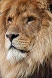 Koning Royalty-vrije Stock Afbeeldingen