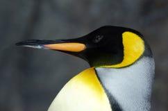Koning Penguin - Aptenodytes Patagonicus stock foto's
