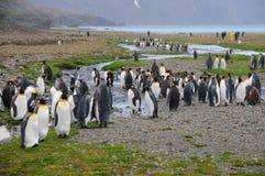 Koning Penguins bij Fortuna Baai stock fotografie