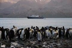 Koning Penguins bij Fortuna Baai stock afbeelding