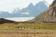 Koning Penguins met een Berg en Gletsjer op de Achtergrond royalty-vrije stock afbeeldingen