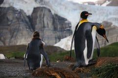 Koning Penguins op Gouden Haven royalty-vrije stock afbeelding