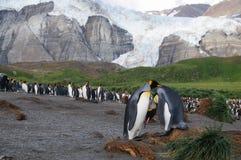 Koning Penguins op Gouden Haven royalty-vrije stock afbeeldingen