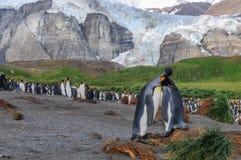 Koning Penguins op Gouden Haven stock fotografie