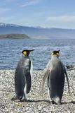 Koning twee pinguins dichtbij overzees Stock Fotografie