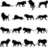 Koning van dieren - leeuw Stock Afbeelding