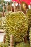 Koning van furit durian van Thailand Royalty-vrije Stock Foto's
