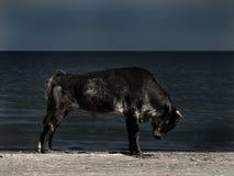 Koning van het strand stock afbeeldingen