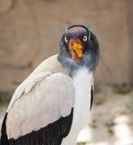 Koning Vulture stock fotografie