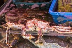 koningskrabben in de ochtendmarkt van Hakodate Royalty-vrije Stock Foto