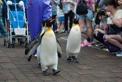 Koningspinguïn in dierentuin royalty-vrije stock foto's