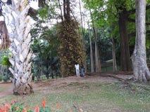 Koninklijke Botanische tuin Kandy Sri Lanka, duidelijke Zonnige dag, in groene bomen stock afbeelding