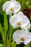 Koninklijke Botanische Tuinen. Verschillende types van orchideeën Stock Foto