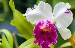 Koninklijke Botanische Tuinen. Verschillende types van orchideeën Royalty-vrije Stock Fotografie