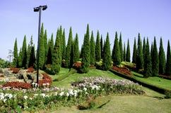 Koninklijke flora 2011 bij chiangMai. Stock Afbeeldingen
