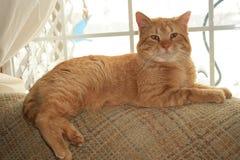 Koninklijke kat. Stock Foto's