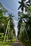 Koninklijke palmweg Koninklijke Botanische Tuinen Peradeniya kandy Sri Lanka royalty-vrije stock fotografie